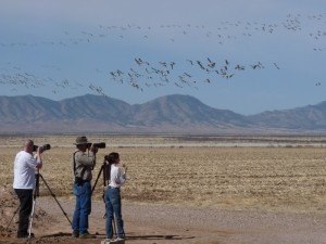 Watching cranes in the Sulphur Springs Valley.
