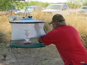 """Banding team member Chuck Ostrander gently extracts a bird from the remote-controlled """"bonnet"""" trap."""