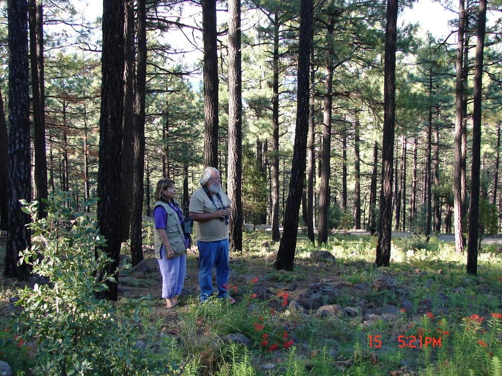 Forest habitat